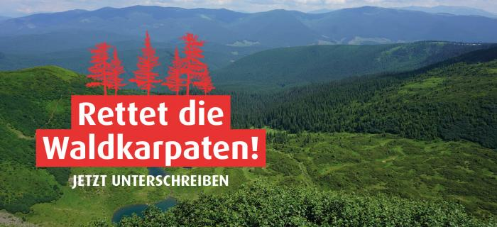 Save the Carpathian Forest