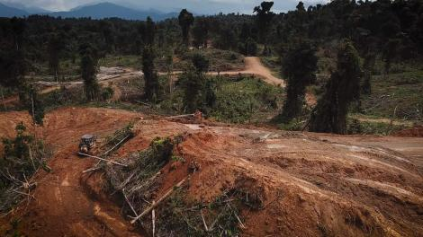 UNESCO World Heritage Site threatened by oil palm plantations